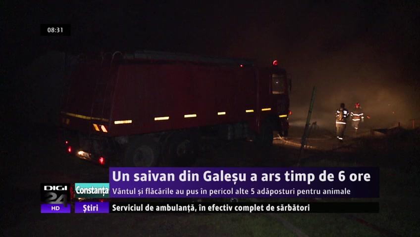 VIDEO   Un saivan din Galeşu a ars timp de 6 ore.Vântul şi flăcările au pus în pericol alte 5 adăposturi pentru animale