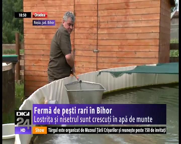 VIDEO   Fermă de peşti rari în Bihor